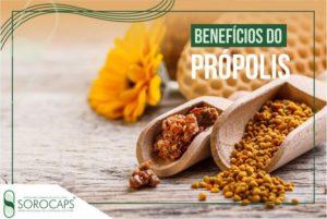 Sorocaps Indústria Farmacêutica própolis-blog-300x201 Blog